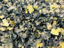 Grey yellow flowers. Fabulous grey yellow flowers as a background royalty free stock images