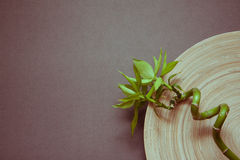 Grey zen background with bamboo. Spa concept background with empty wooden bowl and green bamboo stock image