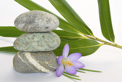 Grey zen stones with bamboo en crocus on empty white background Royalty Free Stock Image