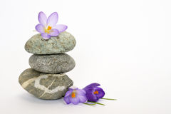Grey zen stones with bamboo en crocus on empty white background Royalty Free Stock Image