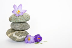 Grey zen stones with bamboo en crocus on empty white background Royalty Free Stock Images