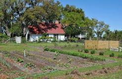 Greyfield Garden. Crops growing at Greyfield Garden at Cumberland Island, Georgia royalty free stock photos