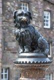 Greyfriars博比在爱丁堡 免版税库存图片