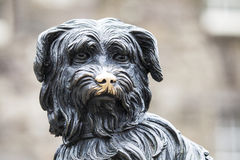 Greyfriars Bobby in Edinburgh. A statue of Greyfriars Bobby in Edinburgh, Scotland.  Bobby was a Skye Terrier who supposedly spent 14 years guarding the grave of Royalty Free Stock Photos