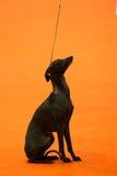 greyhound ιταλικά Στοκ Εικόνες