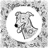 Greyhound κεφάλι σκυλιών Στοκ Φωτογραφίες