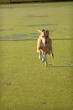 greyhound τρέξιμο Στοκ φωτογραφία με δικαίωμα ελεύθερης χρήσης