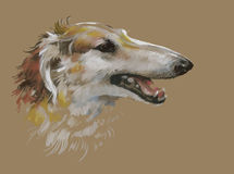 Greyhound animal dog watercolor illustration Stock Photos