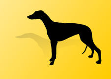 Greyhound Vector. The Greyhound is a breed of dog, a sighthound which has been bred for coursing game and Greyhound racing vector illustration