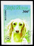 Greyhound (Canis lupus familiaris), International stamp exhibition New Zealand '90 (Dogs) serie, circa 1990. MOSCOW, RUSSIA - NOVEMBER 10, 2018: A stamp printed royalty free stock image