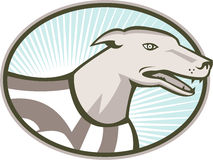 Greyhound Dog Head Retro Stock Images