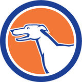 Greyhound Dog Head Side Retro Circle Stock Image