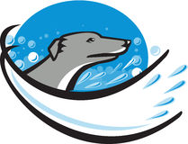 Greyhound Dog Head Water Bubble Oval Retro Royalty Free Stock Images