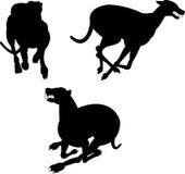 Greyhound dog racing stock illustration