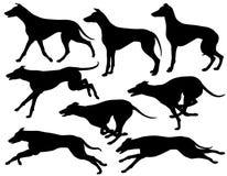 Greyhound dog silhouettes. Set of eps8 editable vector silhouettes of greyhound dogs running, standing and trotting