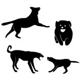 Greyhound dog silhouettes royalty free stock photos
