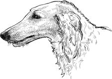 Greyhound head Royalty Free Stock Photos