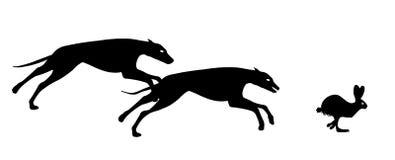 Greyhound hunting rabbit Royalty Free Stock Photography