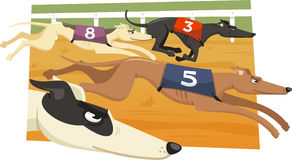 Greyhound race illustration Stock Images
