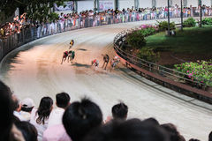 Greyhound race in Vietnam Royalty Free Stock Image