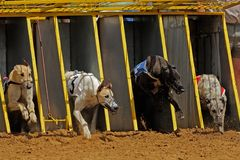 Greyhound racing Stock Photo