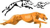 Greyhound. Running greyhounds - color and black illustrations Stock Photo