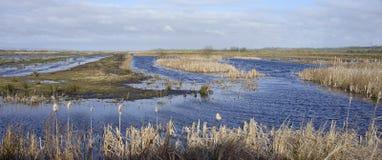 Greylake restored wetlands. RSPB Greylake restored wetlands, Somerset Levels Stock Photography