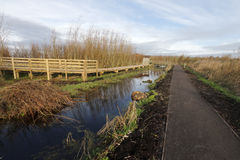 Greylake RSPB Reserve Stock Photography