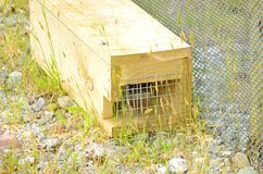 Predator trap at the Bois Gentil Kiwi Crèche, New Zeland. Greymouth, South Island, New Zealand, November 22, 2016: Predator trap at the Bois Gentil Kiwi Cr stock photos