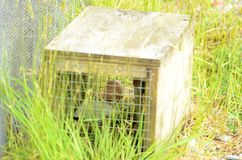 Predator trap at the Bois Gentil Kiwi Crèche, New Zeland. Greymouth, South Island, New Zealand, November 22, 2016: Predator trap at the Bois Gentil Kiwi Cr stock image