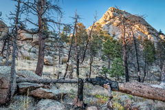 Greyrock and forest after wildfire Stock Images
