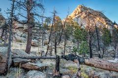 Greyrock und Wald nach verheerendem Feuer Stockbilder
