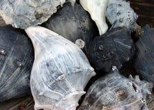 greyscale природы Стоковая Фотография RF