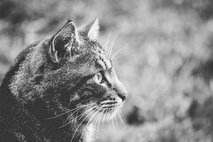 Greyscale Photo of Cat Royalty Free Stock Photos