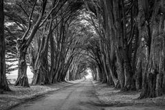 Greyscale Photo of Road in Between Trees Stock Images