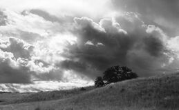 Greyscale Photo of a Tree Under Cloudy Sky at Daytime Royalty Free Stock Photography