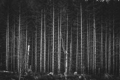 Greyscale Photography of Bare Trees Stock Photography
