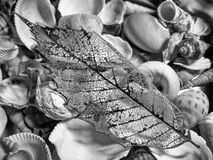 Greyscale Photography of Seashell With Leaf Stock Image