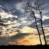 Greyscale Photography of Tree Under Blue and Grey Sky Stock Photo