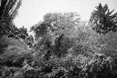 Greyscale Photography of Trees Stock Images