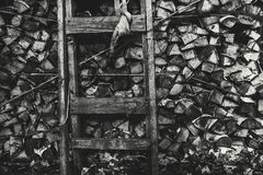 Greyscale view of firewood stock with stepladder Royalty Free Stock Photo