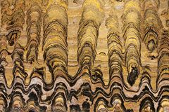 Greysonia sp stromatolites, Vendian期间650百万岁,前寒武纪 免版税库存图片
