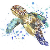 Gráficos de la camiseta de la tortuga de mar el ejemplo de la tortuga de mar con la acuarela del chapoteo texturizó el fondo acua Fotografía de archivo libre de regalías
