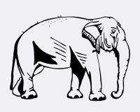 Gráficos desenhados à mão do lápis, elefante Gravura, estilo do estêncil Logotipo preto e branco, sinal, emblema, símbolo Selo, s Foto de Stock