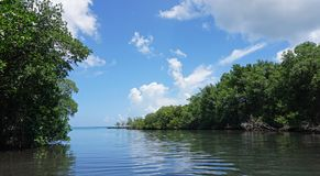 gri gri mangroves Royalty Free Stock Images