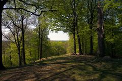Grib skov in Denmark a nice summer day. Where the beech trees grows royalty free stock photography