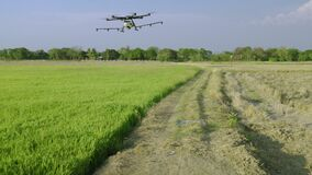 Gricultural drones are taking off to spray medicine or fertilizers into the rice fields.