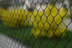 The grid the chain-link with a covering of paint. stock image