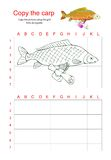 Grid copy puzzle - the picture of fish carp with bag. Royalty Free Stock Photography