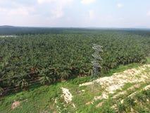 Grid electricity through oil palm plantation. Stock Photos